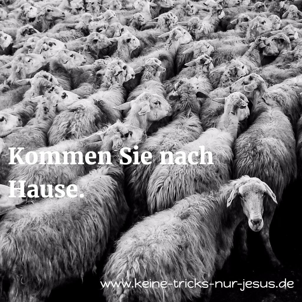 Für Gott gibt es keine schwarzen Schafe