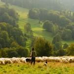 Das Gleichnis vom verlorenen Schaf