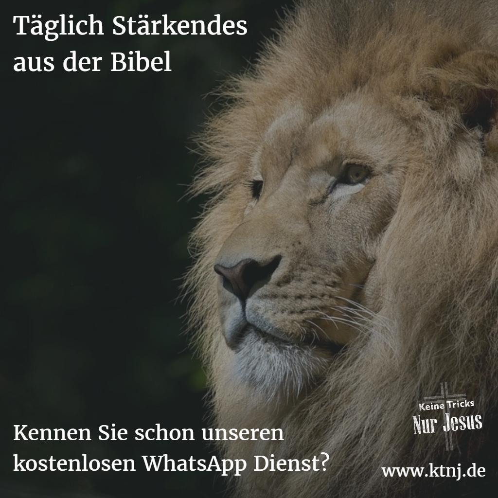 whatsapp-ktnj-loewe