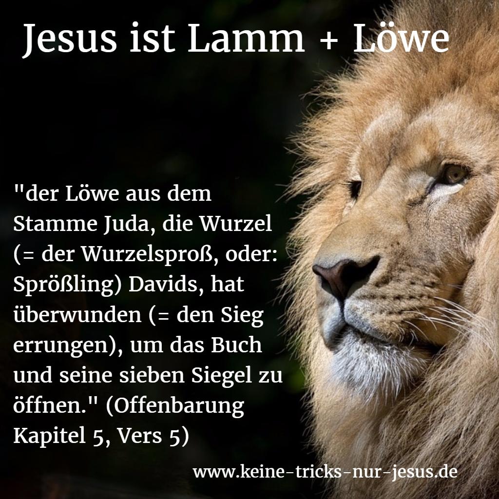 jesus-lamm-loewe