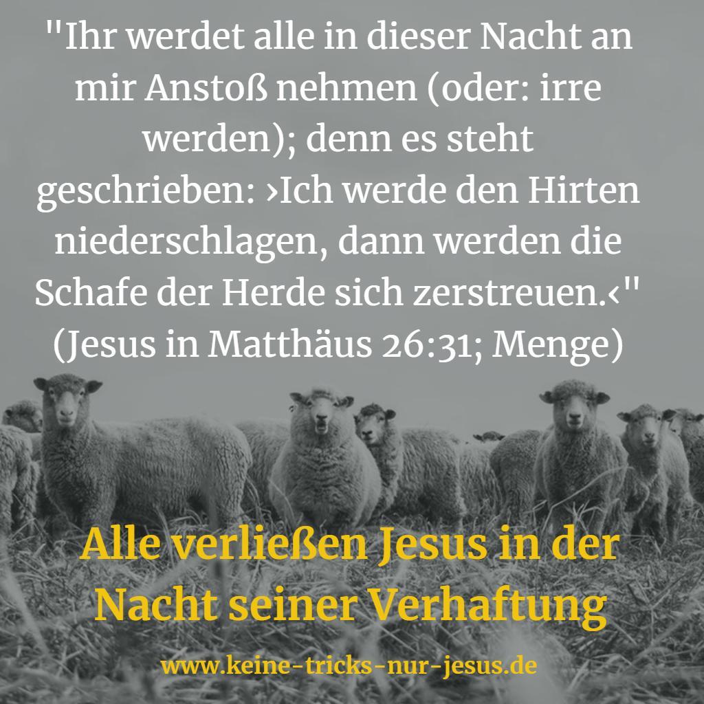 Schafe der Herde