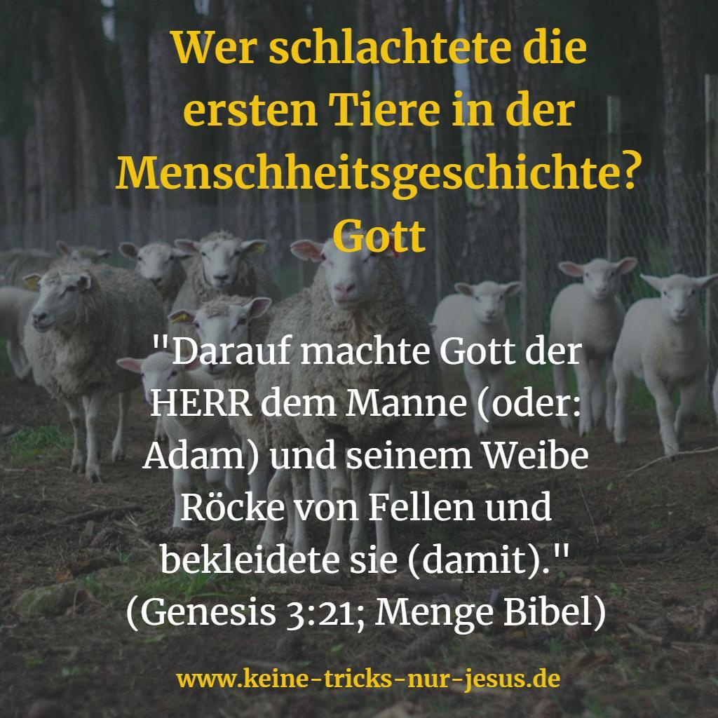 Schlachten von Tieren Bibel