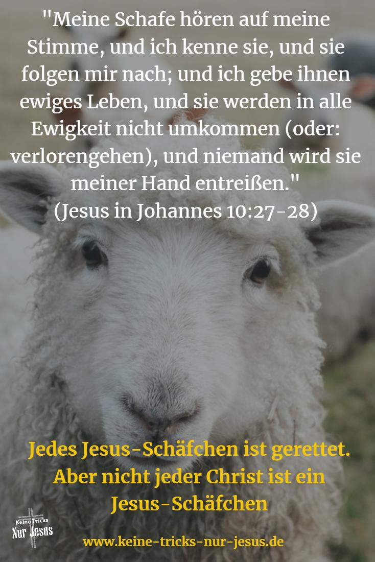 Jesus-Schäfchen