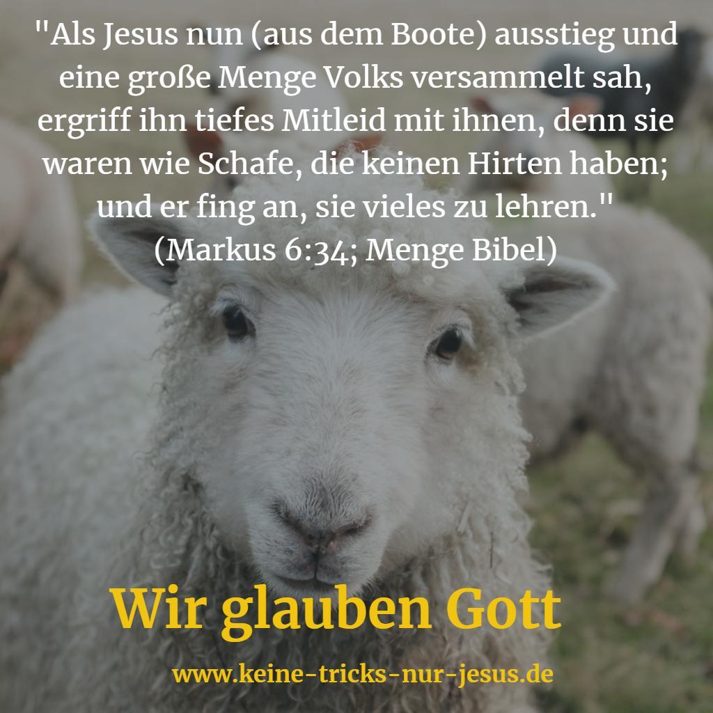 Schafe ohne Hirten
