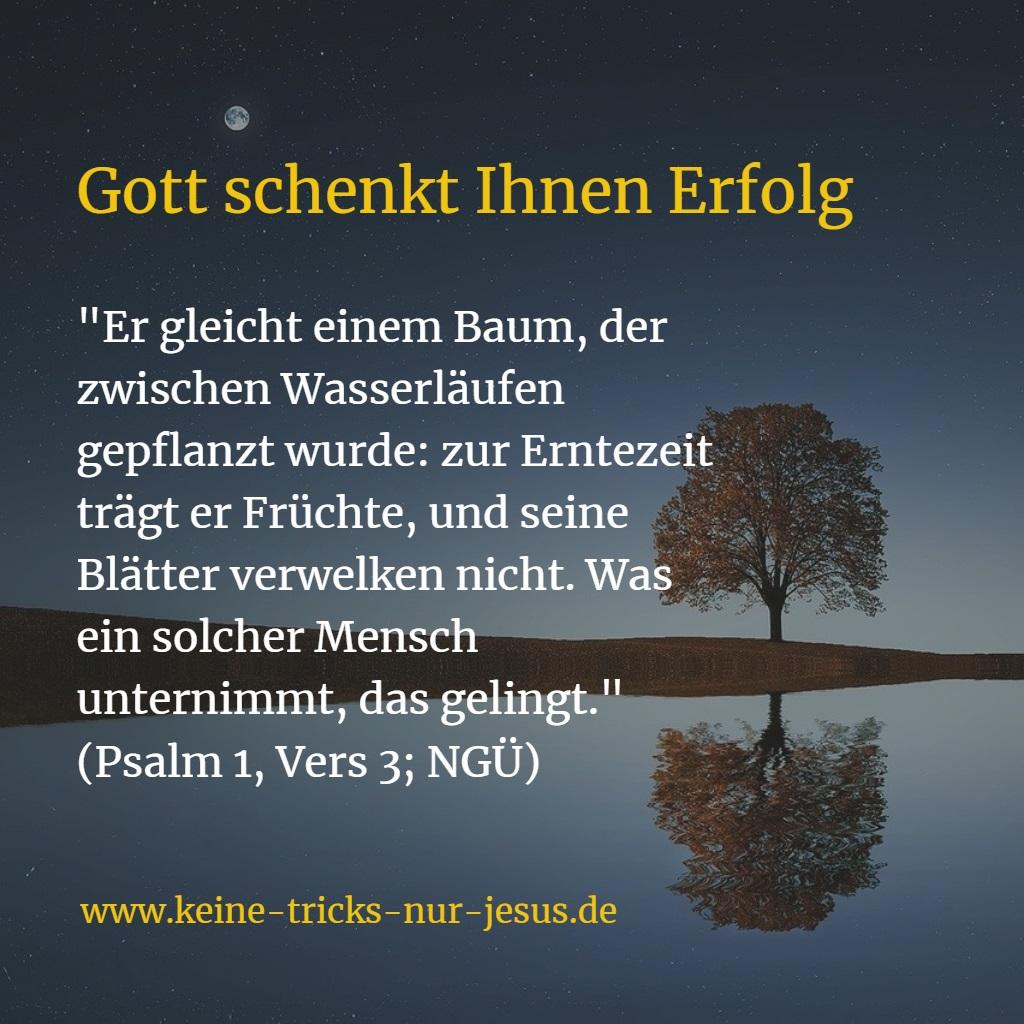 Erfolg kommt von Gott - Psalm 1,3